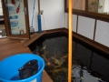 Fischhaus5